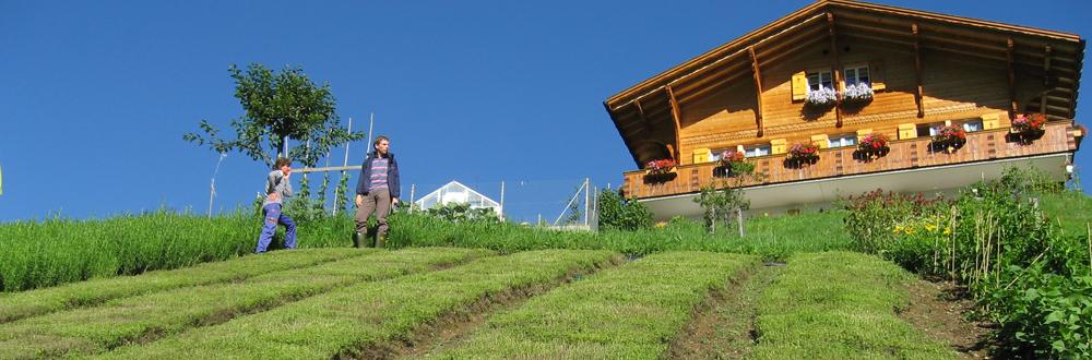 Swiss Alpine Herbs Kräuteranbau