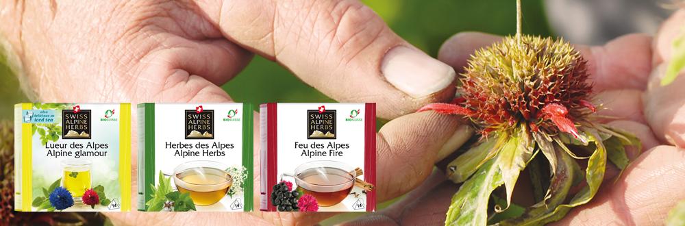 Swiss Alpine Herbs Tee fr en